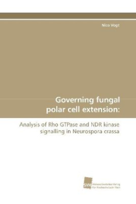 Governing fungal polar cell extension