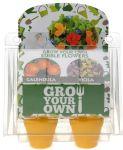 Zuchttopf-Set 4er Blütensalat Ringelblume und Stiefmütterchen