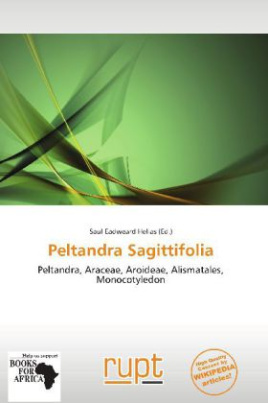 Peltandra Sagittifolia
